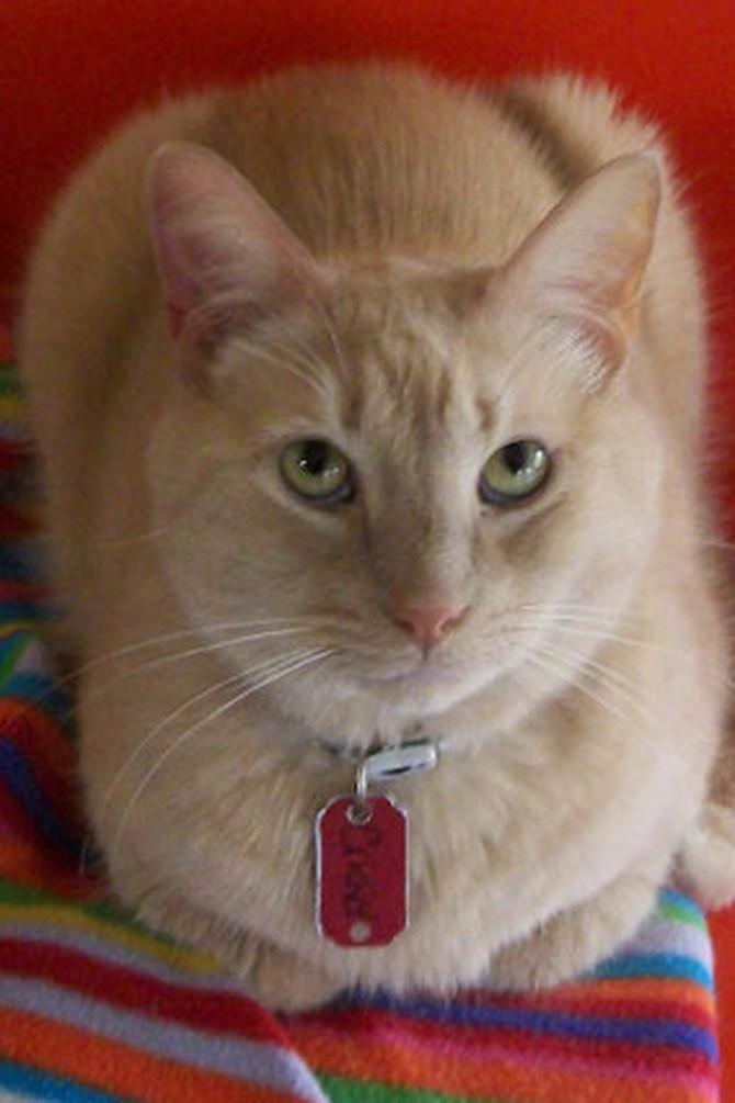 Adopt a Dog or Cat - PetFinder - Adopt the Internet