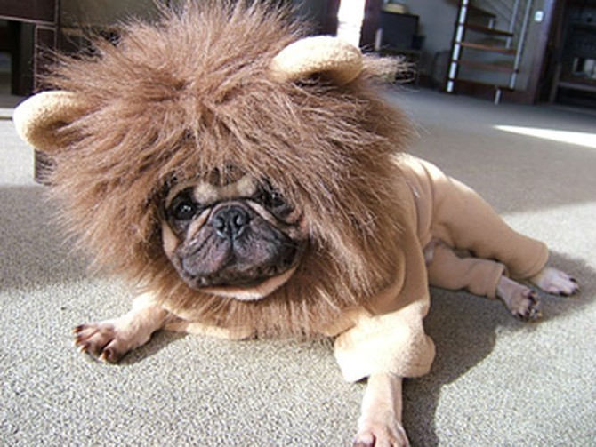 Clapton dressed as a lion.