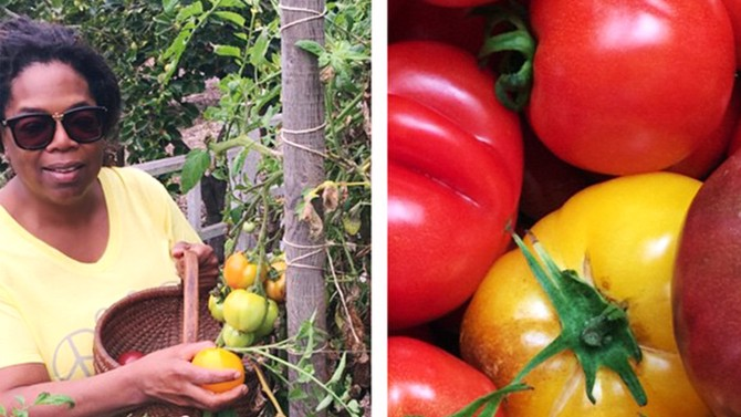 oprah and her tomatoes