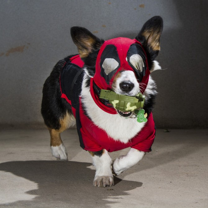 dogpool deadpool costume