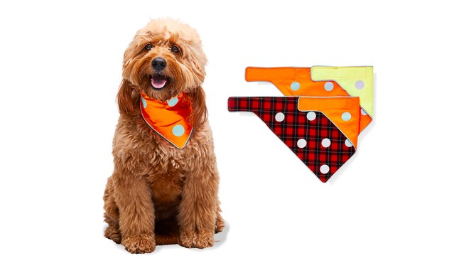 Spot the Dog The Flip and Puppy Plaid Reversible Bandanas