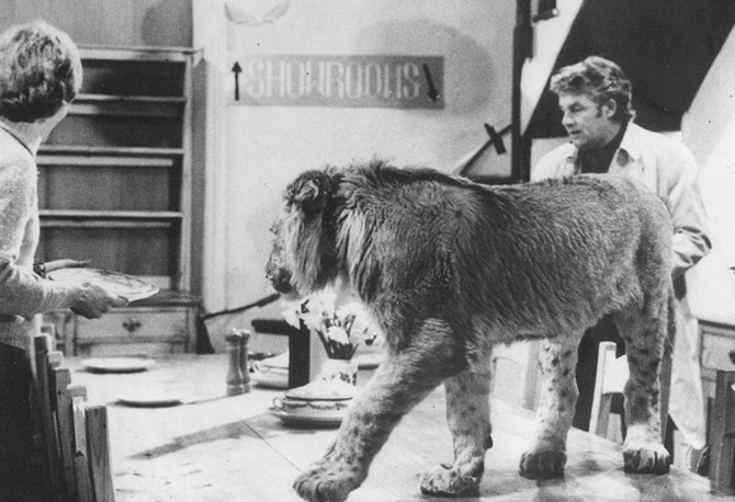Christian the lion at Sophistocat
