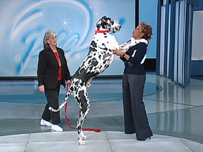 Oprah meets Gibson, the world largest dog.